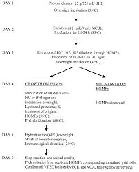 Mcb Size Chart Flow Chart For The Vtec Dna Hgmf Method Mcb Macconkey