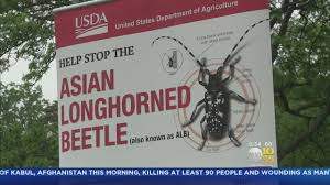State Steps Up Fight Against Asian Longhorn Beetle Youtube
