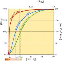 Charts December 2010 File Fetal Hemoglobin Chart Jpg Wikipedia