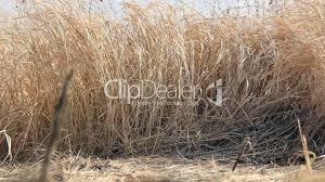 dry grass field background. Dry · Field Flora Grass Background