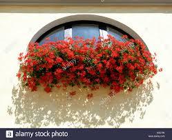 Sommer Blumen Im Topf Auf Der Fensterbank Draussen Auf Den Hellen