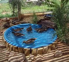 how to build a duck pond homestead survival