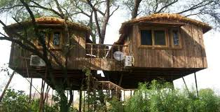 tree house jaipur. Tree House Jaipur E