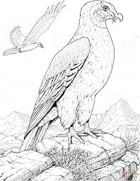 Small Picture Hawk Prey Bird coloring page Free Printable Coloring Pages