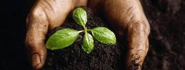 От чего зависит плодородие почвы как проводить уход за грунтом на  От чего зависит плодородие почвы или как ухаживать за грунтом на даче