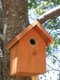 Best 25  Bird house plans ideas on Pinterest   Cabane simple  Bird additionally 19 Coolest Wren Bird Houses together with  likewise Cool Bird House Plans Free Bluebird Purple Martin Brown Wren furthermore Glamorous Wren Houses Plans Images   Best idea home design likewise Bird Houses Boys Can Build 2 in addition Over 50 Free Bird House and Bird Feeder Woodcraft Plans at together with Free Bird House Plans   Easy Build Designs further Best 25  Wren house ideas on Pinterest   Bird houses painted  Bird further  additionally . on wren birdhouse design