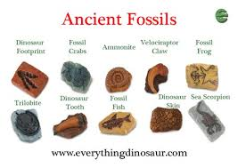 Providing Identification Help With Fossil Models And