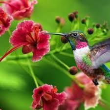 Resultado de imagem para flores miudas