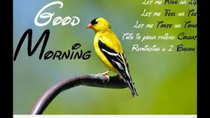 Good Morning America Quotes Best Of Good Morning WishesQuotesPrayersBlessingsGreetingsEcard