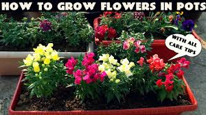 how to grow flower plants at home urban gardening