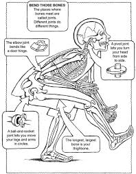 Smooth muscle is specialized for. Kids Anatomy Coloring Pages Page 4 Line 17qq Com