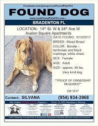 how to make lost dog flyers missing dog flyer do you know me founddog lost dog bradenton fl