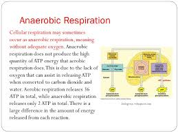 write the general equation for aerobic cellular respiration chemical equation for aerobic cellular respiration in words state a word anaerobic cell humans