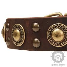 dog collar trends with gold conchos and studs for amstaff