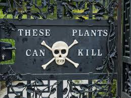 Image result for poison garden alnwick