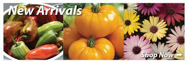 garden seed companies. Garden Seed | Vegetable Catalog Company Horticultural Products \u0026 Services HPS Companies H