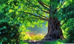 Beautiful Tree Wallpapers Group (71+)