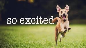 Tokeo la picha la excited