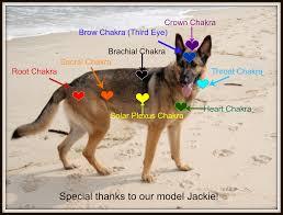 Animal Chakra Chart Chakra Basics Gardens Of Tranquility