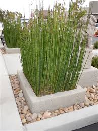 Big Concrete Planters 10 Excellent Examples Of Built In Concrete Planters Custom