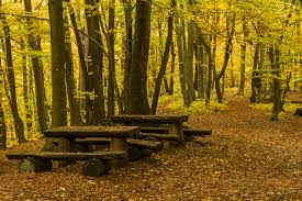 autumn furniture. Table Landscape Tree Forest Outdoor Plant Wood Bench Sunlight Leaf Hill Seat Autumn Furniture Season Woodland E