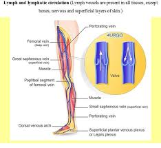 the cause of it stop of blood flow from vein to heart during atrium systole at these time pressure in it increase methods of investigation of venous pulse