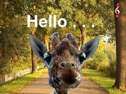 Image result for greetings with giraffes