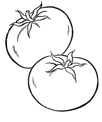 The Best Free Tomato Drawing Images Download From 360 Free Drawings
