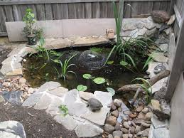 outdoor turtle pond designs. turtle pond   thread: my and future bluey enclousure outdoor designs l