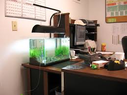 office desk fish tank. Amanos Should Be Here Next Week And CRS Probably In A Month Or So. Let Me Have It People! Office Desk Fish Tank R