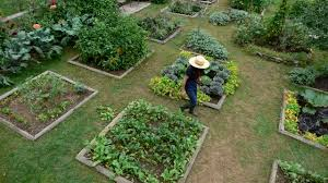planning a kitchen garden site and