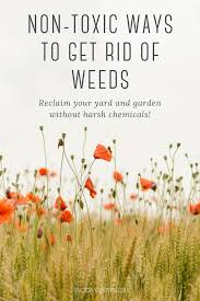 how to get rid of weeds naturally