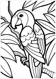 Tranh cho bé tô màu con chim