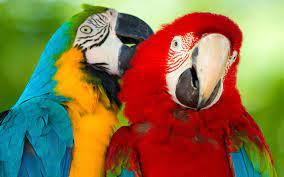 Parrot Macaw Bird Hd Wallpaper ...