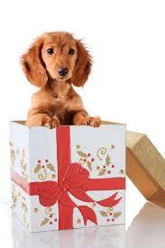 home décor dachshund gifts