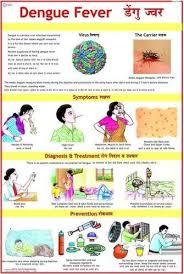 Dengue Fever Charts