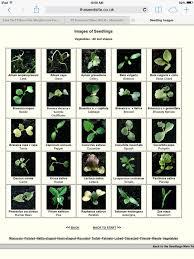 Herb Plant Identification Chart 3 Leaf Plant Identification Atlantiquepaysages