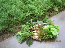 Kitchen Garden Produce Maas Kitchen Garden And Recipes My Food Escapades
