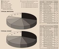 Whitetail Deer Size Chart Boone And Crockett Club Boone And Crockett Club Field