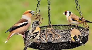 """Уъркшоп за ученици, наречен """"как да направим уникална хранилка за птици се състоя в новото художествено пространство за детско творчество работилница за. Hranilki Za Ptici V Gradinata Www Domigradina Com"""