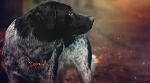 5 Tipps Wie Du Anderen Hundehaltern So Richtig Auf Die Nerven Gehst