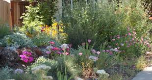 california native front garden bed in spring