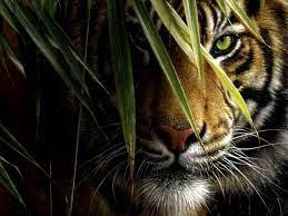 1080p HD Nature Animals Wallpaper High ...