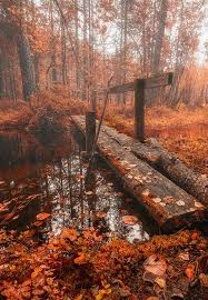 outdoor woods backgrounds. Wonderful Backgrounds Autumn Trees Bridge Nature Picture Best Of Enantiodromija By  Tuomo Arovainio And Outdoor Woods Backgrounds