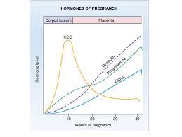 Prolactin Level During Pregnancy Hormones Level During