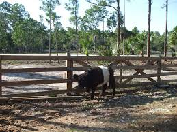 wood farm fence. Wooden Cattle Fence With 16\u0027 Easement Access Gate. Wood Farm