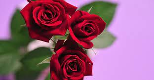 赤い 薔薇 花 言葉