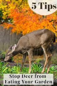 ways to stop deer from eating plants