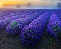 1280x1024 Lavender Dawn desktop PC and ...