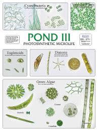 Pond Iii Photosynthetic Microlife Chart